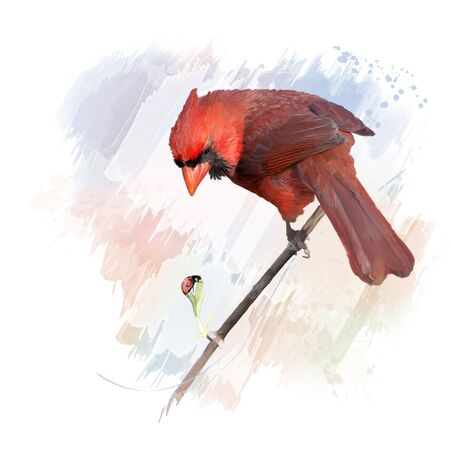 Digital Painting of Male Northern Cardinal Imagens
