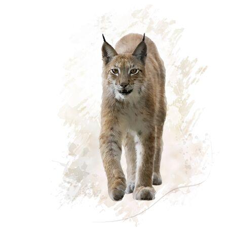 digital painting of lynx portrait