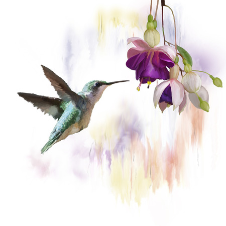 Digital Painting of  Hummingbird and flowers Banque d'images