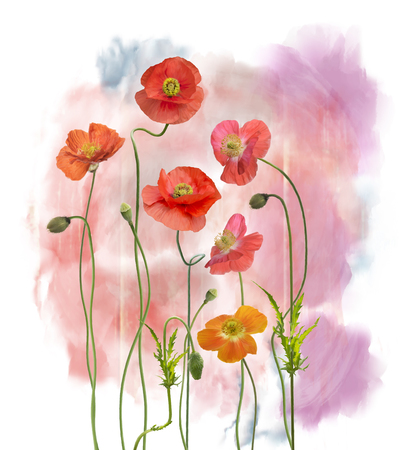 Digital Painting of  Red Poppy Flowers Stock Photo