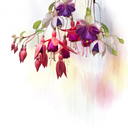 Digital Painting of  Purple and red Fuchsia Flowers on white background