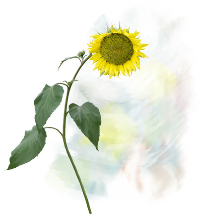 Digital Painting of  Sunflower with stem and leaves