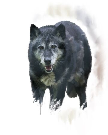 Digital Painting of  Timber Wolf