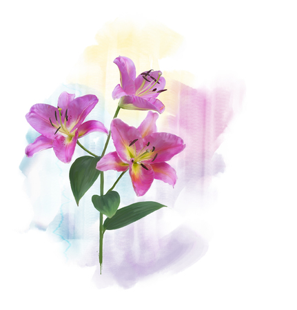 Digital Painting of  Pink Lily Flowers Stock Photo