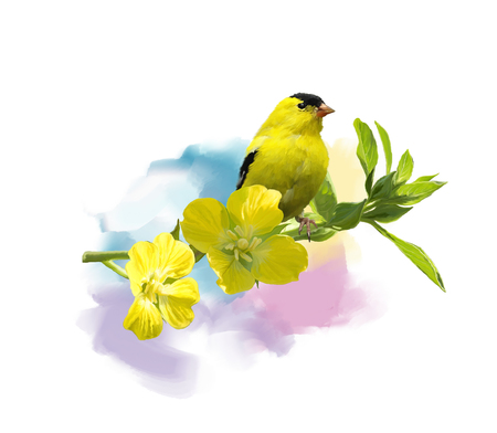Digital Painting of  American Goldfinch with the yellow flowers Imagens - 87979893