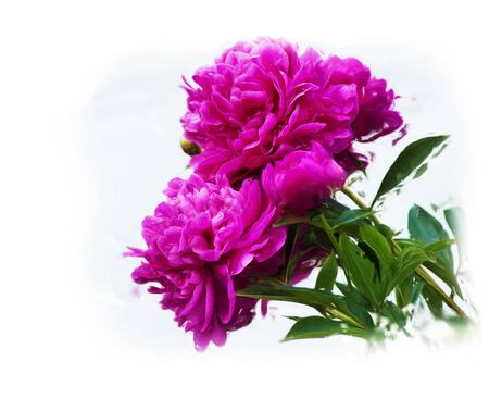 Digital painting of Purple Peony Flowers Stock Photo