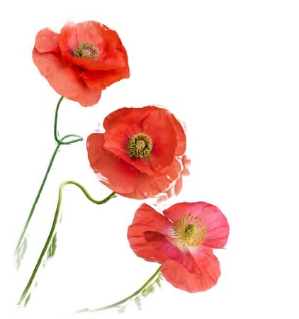 Digital painting of Poppy Flowers Stock Photo
