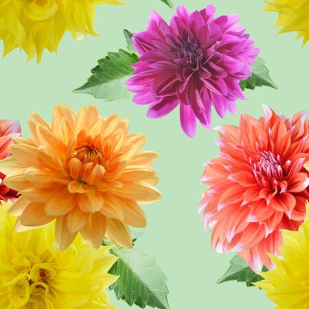 seamless  pattern of dahlia flowers on green background