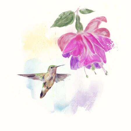 Hummingbird and fuchsia Flower watercolor painting