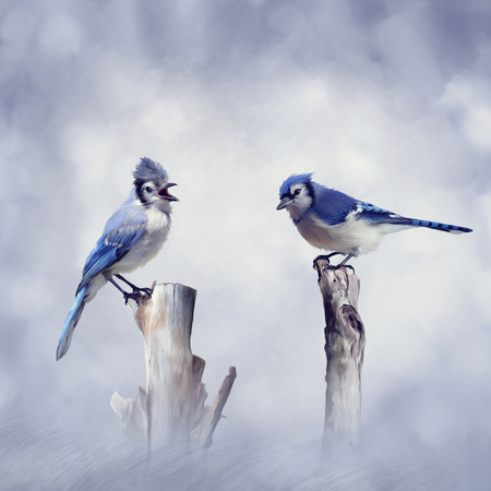 Blue Jay birds perching.Digital painting. 版權商用圖片