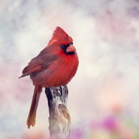 Male Northern Cardinal perches on a stump Foto de archivo - 101173861