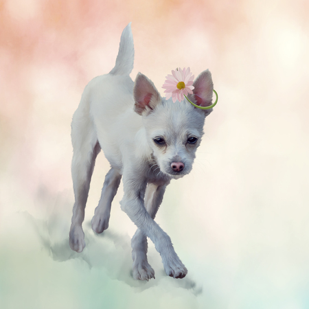 Small white dog . Digital painting Stock Photo