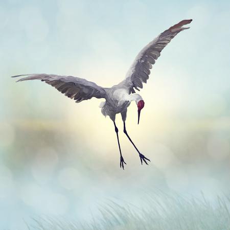 Sandhill Crane painting.Digital art.