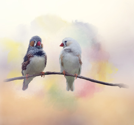 chestnut-eared finch or Australian zebra finch watercolor painting Фото со стока