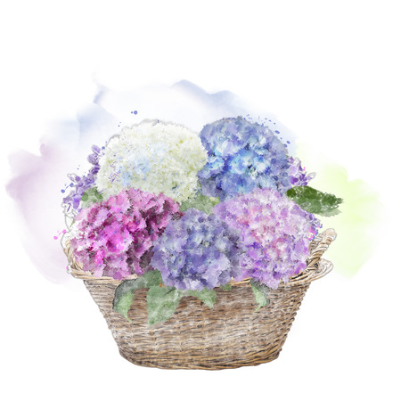 hydrangea flowers in a basket . watercolor painting