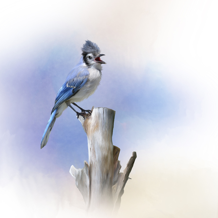 Blue Jay bird perched,watercolor painting Banque d'images