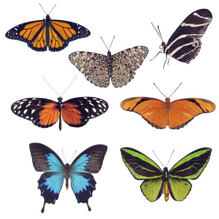 Vlinderinzameling op Witte achtergrond wordt geïsoleerd die Stockfoto