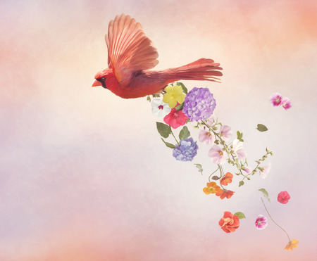 Male Northern cardinal flying with flowers, watercolor painting Foto de archivo - 110285154