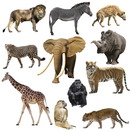 African animals set isolated on a white background