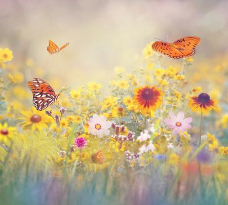 Gulf Fritillary butterflies in a meadow Reklamní fotografie