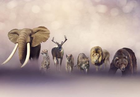 Group of wild animals. Wildlife theme background