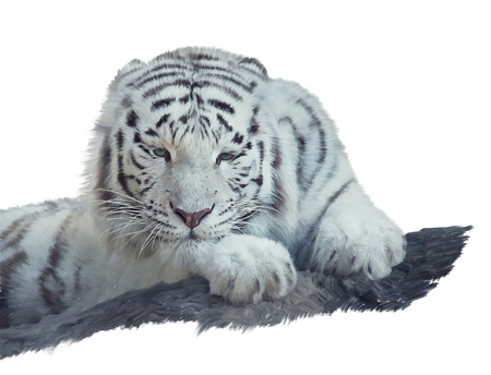 White tiger watercolor painting isolated on white background