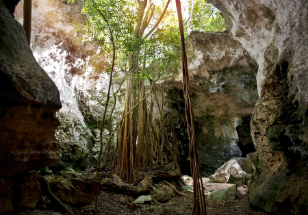 Collapsed Roof of The Cathedral Cave on Bahama Island of Eleuthera and Adaptive Vegetation