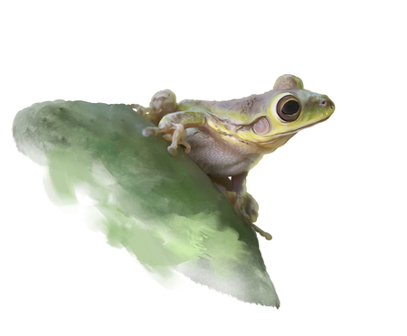 Green tree Frog on a cactus leaf , watercolor illustration.