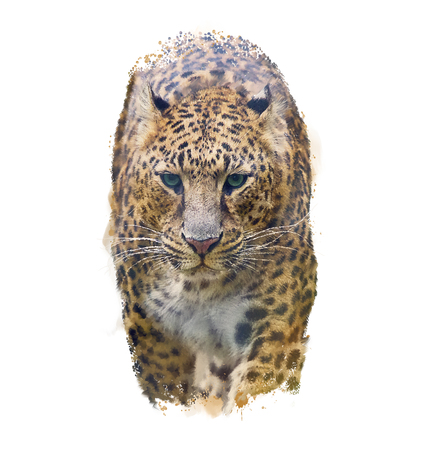 Watercolor Portrait of Leopard  on white background