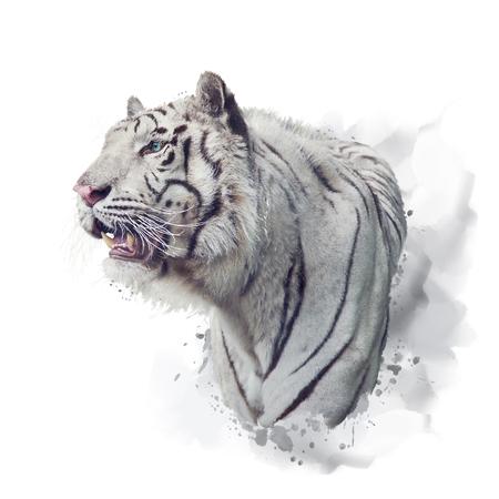 White tiger watercolor illustration on white background Stock Photo