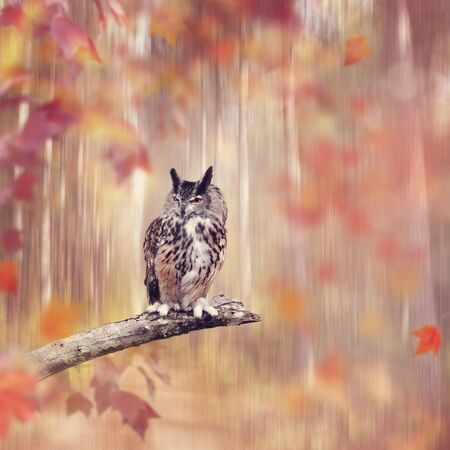 Great Horned Owl perched in the autumn forest