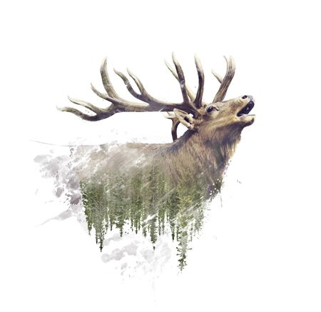Deer and Forest. Watercolor Double Exposure effect on white background.Digital painting.