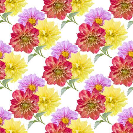 modèle sans couture de fleurs de dahlia sur fond blanc
