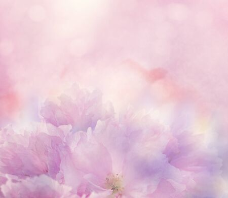 Abstract Floral background with pink flowers,soft focus