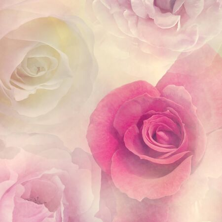 Abstract Floral background with  rose flowers,soft focus 版權商用圖片