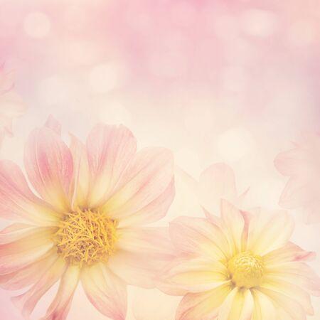 背景、ソフトフォーカスのためのカラフルなダリアの花
