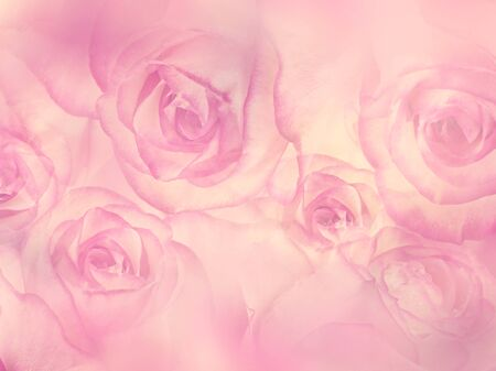 Abstract Floral background with pink rose flowers,soft focus 版權商用圖片