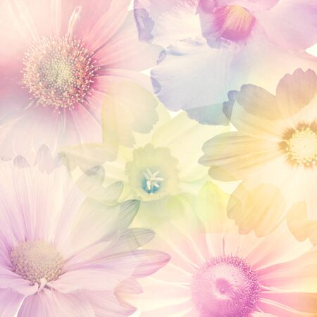 Abstract Colorful Flowers for Background, soft focus