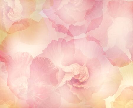 Abstract Hibiscus Flowers for Background, soft focus