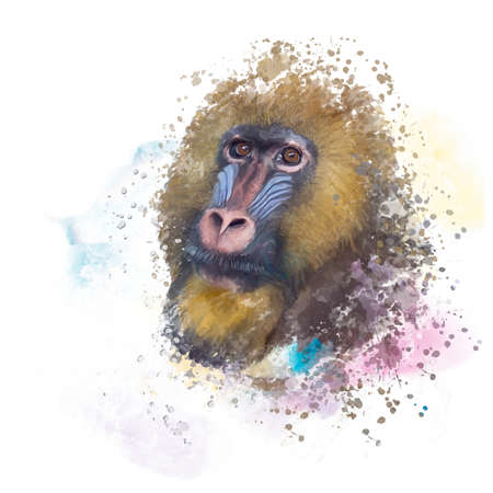 mandrill monkey portrait, tropical primate with a colorful face, watercolor digital painting