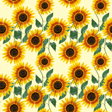 Seamless floral design with sunflowers for background, Endless pattern.