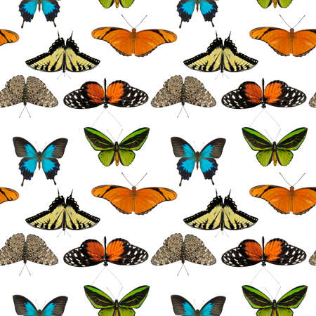seamless pattern with butterflies on white background. Endless design.