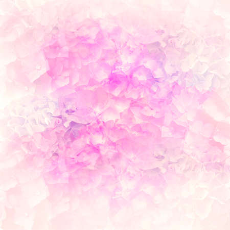Abstract colorful hydrangea flowers for background,soft focus.Close up shot.