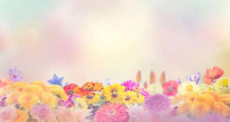 Colorful flowers for background.Soft focus.