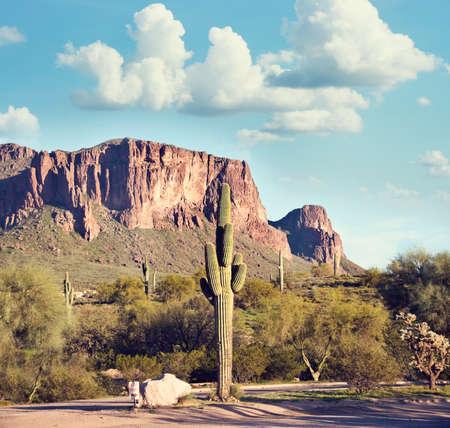 Arizona mauntain landscape with Saguaro Cactus 版權商用圖片