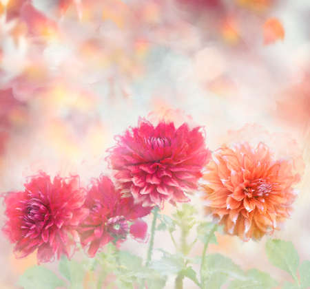 Colorful Dahlia Flowers watercolor illustration. Digital painting.