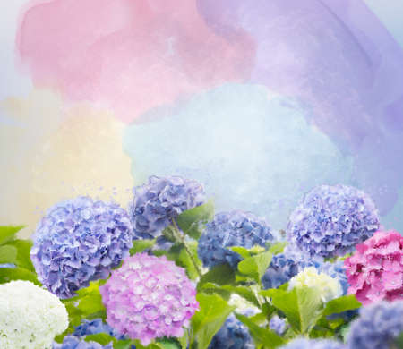 Colorful hydrangea flowers watercolor illustration. Digital painting.