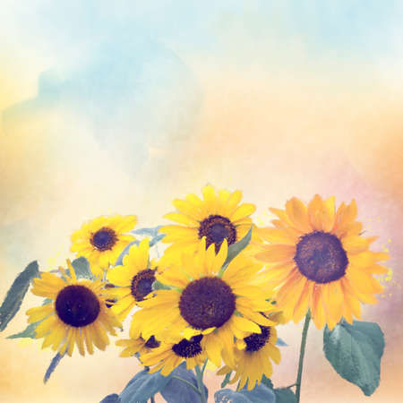Watercolor digital painting of sunflowers. Digital illustration.