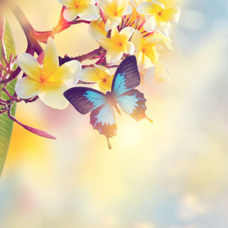 Blue Tropical Butterfly on yellow flowers with sunlight