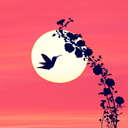 Flowers silhouette and a hummingbird against colorful sunset